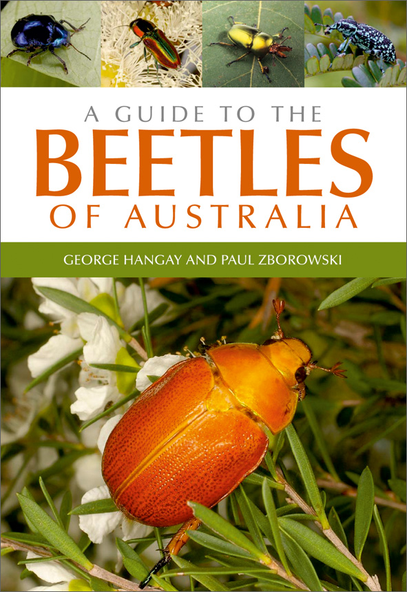 The cover image featuring a large bright orange beetle in spikey leaves an