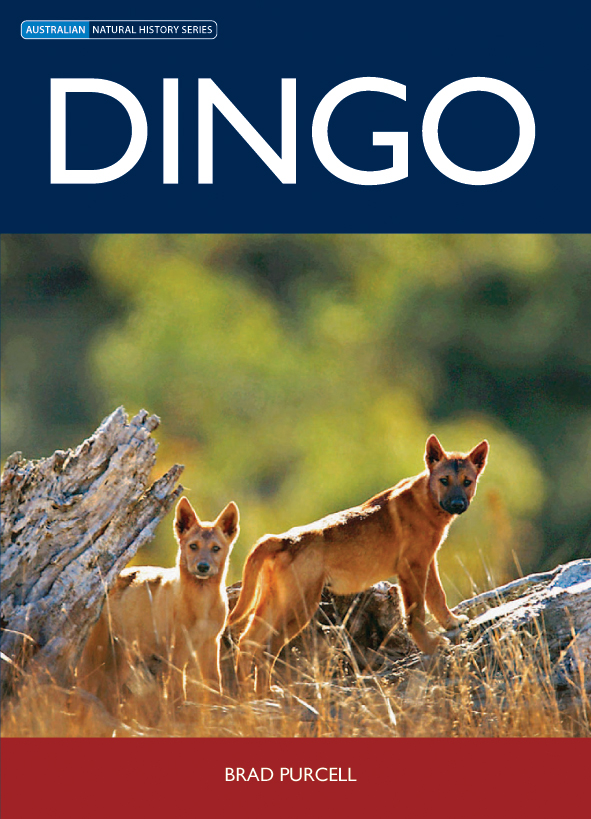The cover image of Dingo, featuring two dingos standing in long dry grass,
