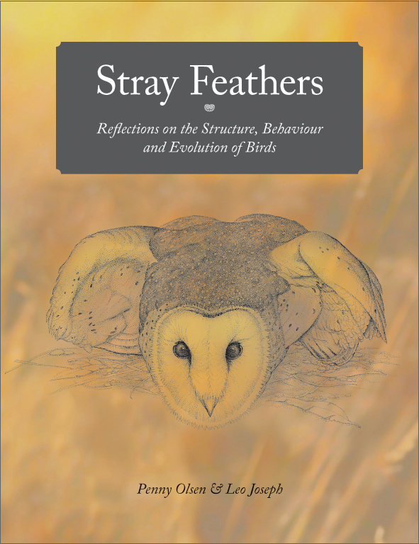 The cover image of Stray Feathers, featuring a burnt yellow cover with an