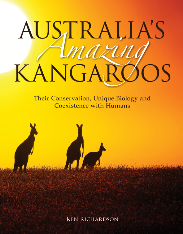 The cover image of Australia's Amazing Kangaroos, featuring three kangaroo