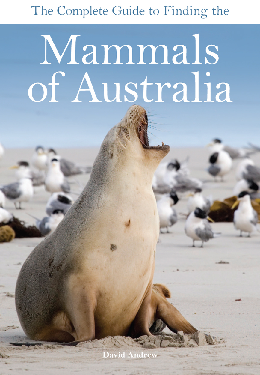 The foreground of the cover features a sea lion sitting on a beach. Behind