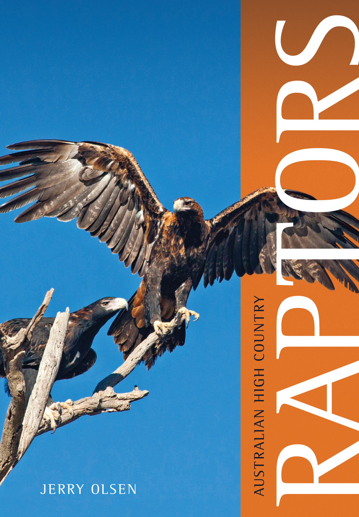 Cover is a large eagle with its wings spread against a plain blue backgrou