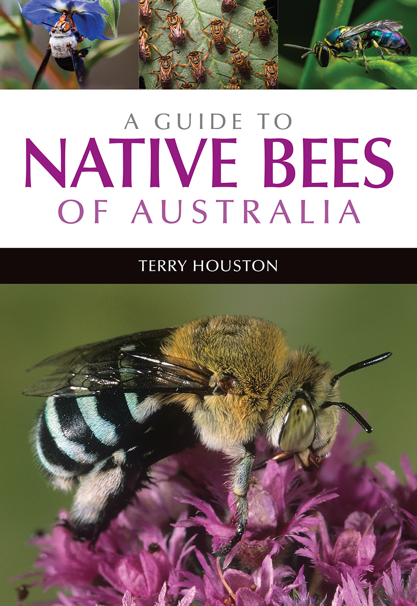 Cover of A Guide to Native Bees of Australia featuring a photo of a blue-b