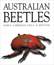 The cover image of Australian Beetles, featuring a large red beetle agains