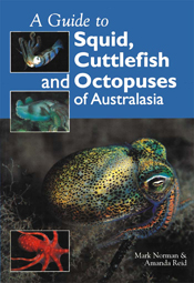 Guide to Squid, Cuttlefish and Octopuses of Australasia