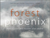 The cover image of Forest Phoenix, featuring a grey smoke filled photograp