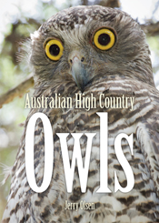 Cover image featuring a grey owl with large round yellow and black eyes.
