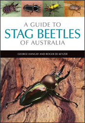 A Guide to Stag Beetles of Australia cover image