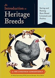 Cover image of Introduction to Heritage Breeds, featuring a large black an