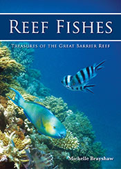 Great Barrier Reef photograph, underwater with two colourful reef fish.