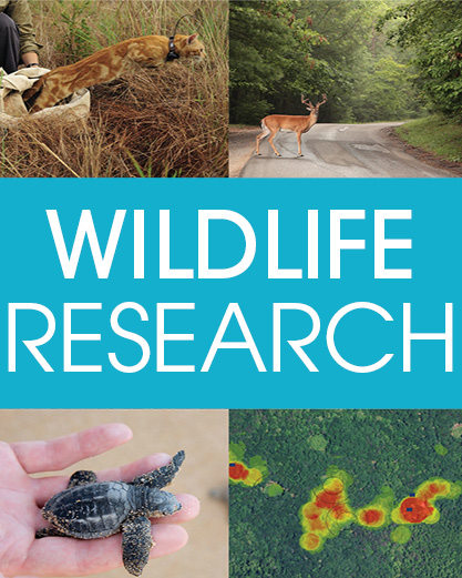 Australian Wildlife Research
