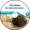 Echidna (or Spiny Ant-eater)