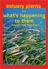 Estuary Plants and What's Happening to them in South-East Australia cover image