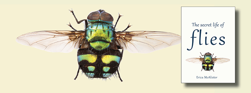 Fascinating stories, adventures and science from the world of flies