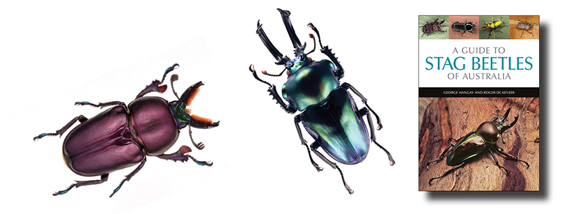 New! A guide to this unusual and diverse family of beetles