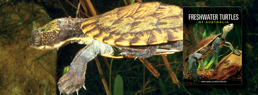A guide to the diverse freshwater turtles of Australia