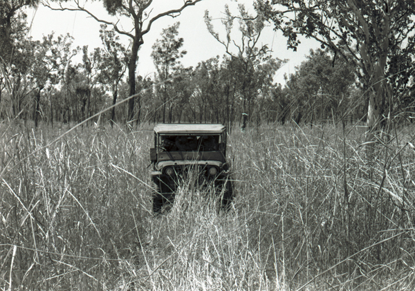 Jeep in tall annual Sorghum, Kimberley, Western Australia 1954