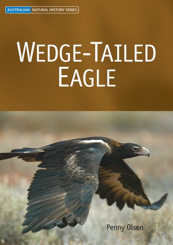 Wedge-tailed Eagle, Penny Olsen, 9780643093140