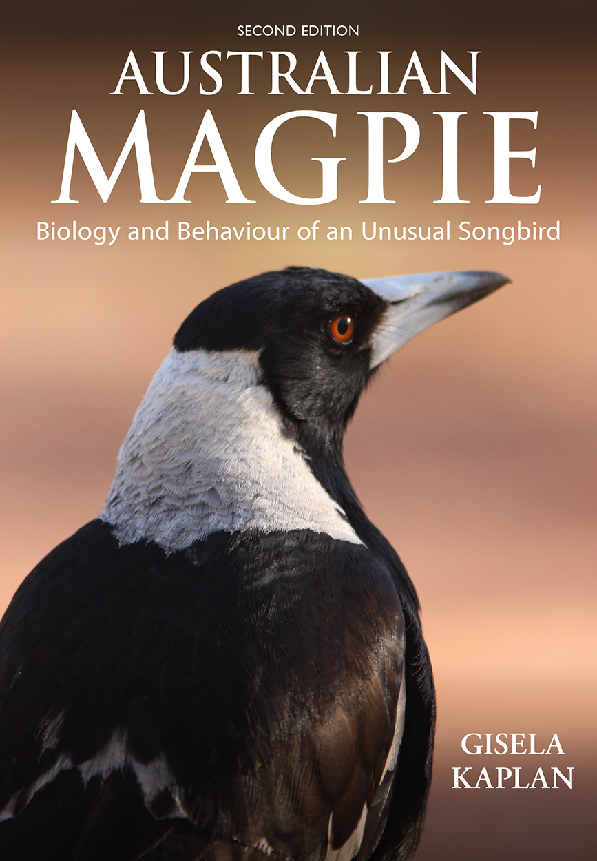 Image result for Magpie Giselle
